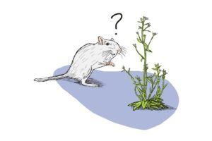 Meet the lab rats of the plant world