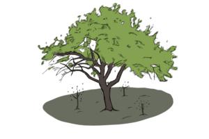 Tree enemies are diversity's friend