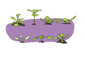 There's no such thing as 'the' Arabidopsis genome