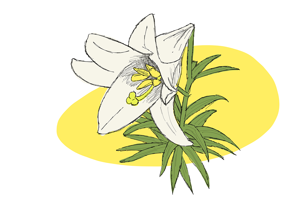 Happy Easter Lily