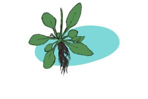 Single cell technology hits plant roots!