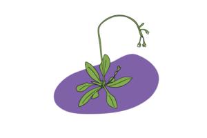 Plant Scientists Stress Plants Out