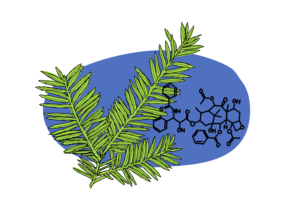 Healing Herbs I – Paclitaxel