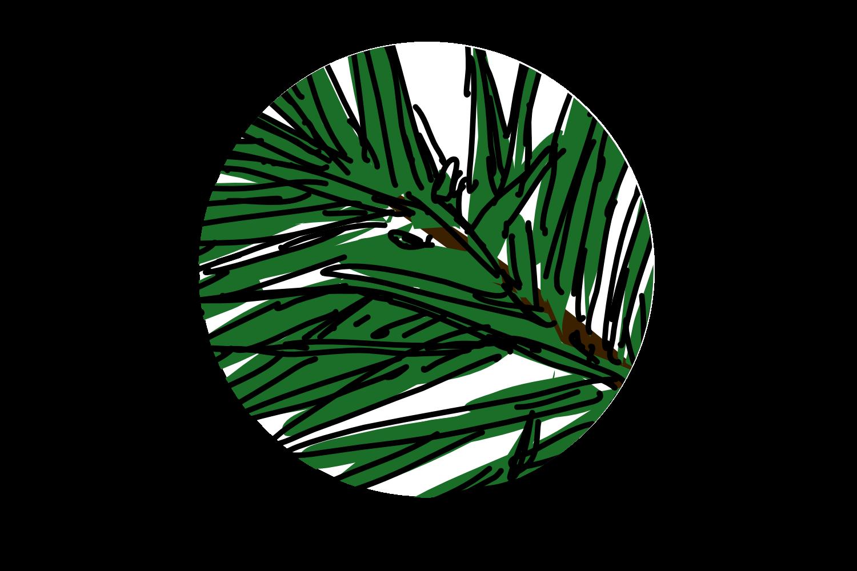 Advent Calendar Day 5 – Forever green