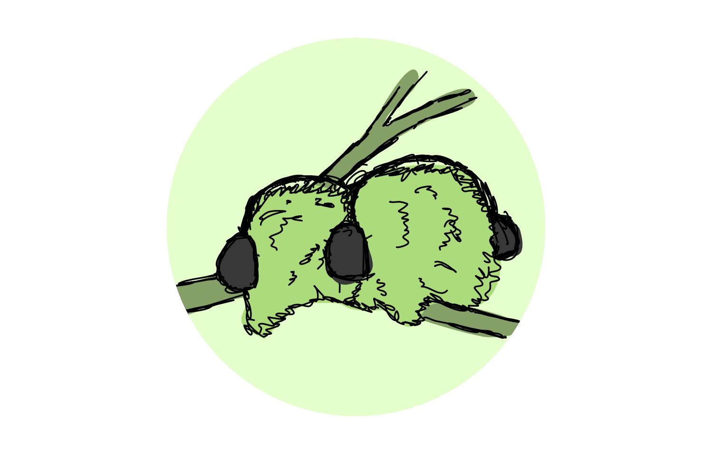 Advent Day 13 – Mistletoes