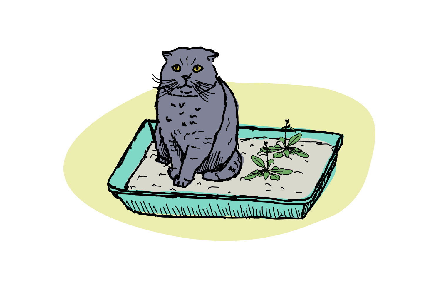 Life in the litterbox