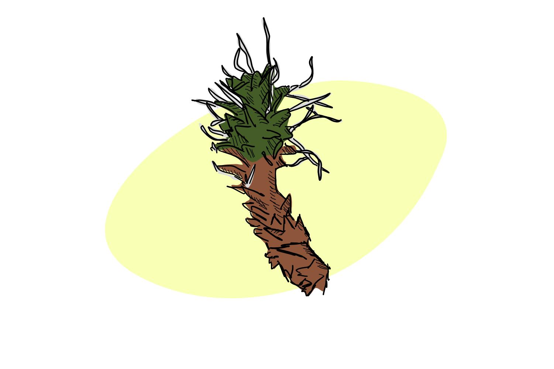 Moss of the desert