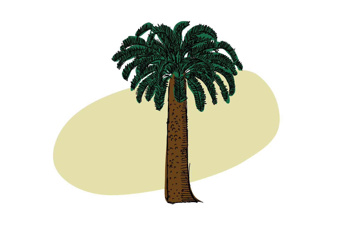 The Isolated Cycad