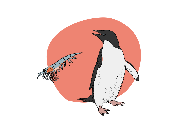 Penguin Poop is Pink