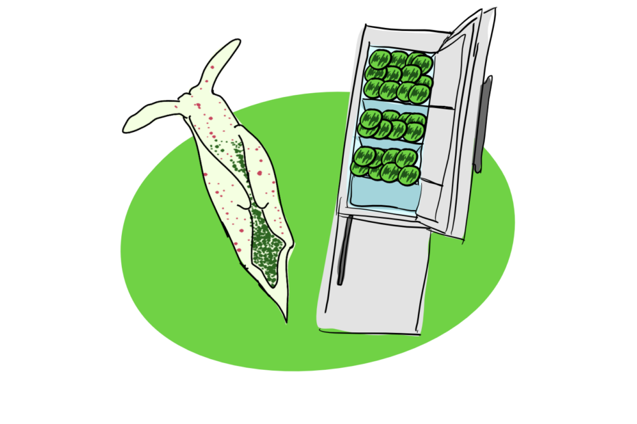 A decorative image of a sea slug and a fridge filled with chloroplasts