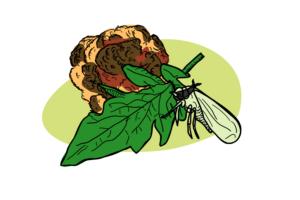 Bug Pest Steals Plant Genes to Neutralize Plant Defences