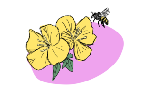 My bees bring all the sugar to the flower